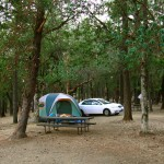 Our camp in the madrone forest