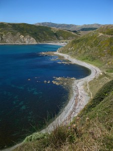 Makara Beach, outside of Wellington, NZ